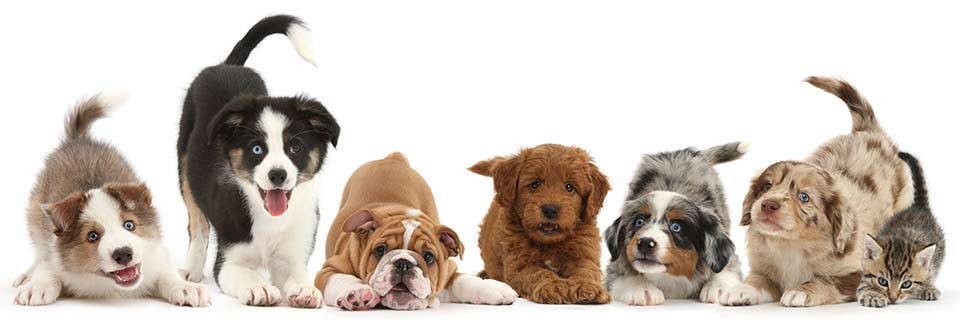 Animal Behaviour Dogs And Cats