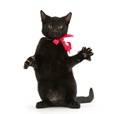 Black kitten reaching out with pink bow