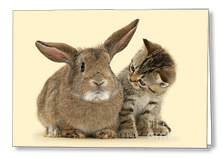 Pet Brothers Greetings card