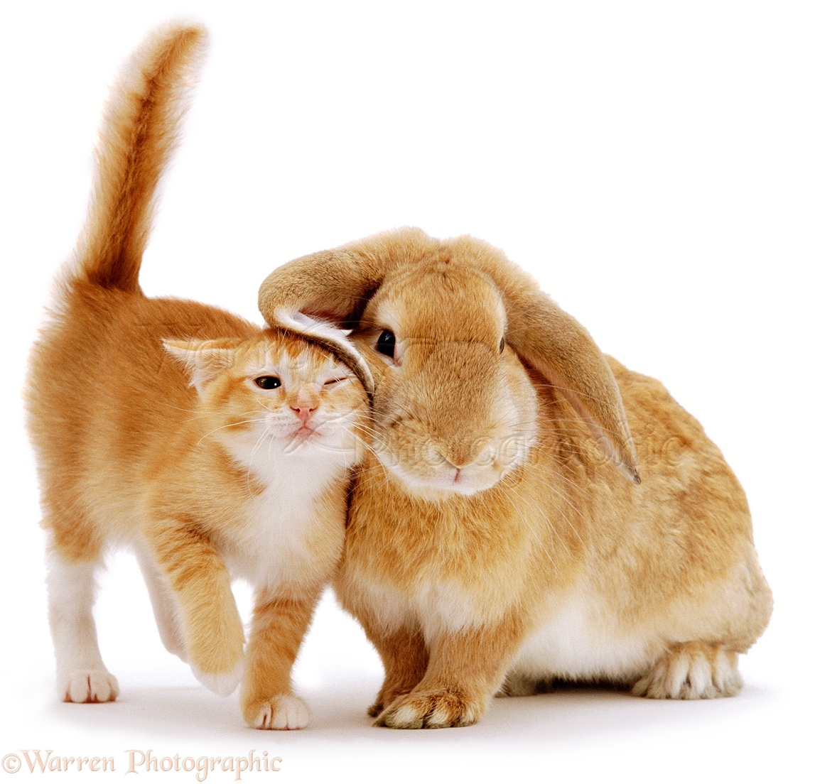 Кролики и кошки фото 7