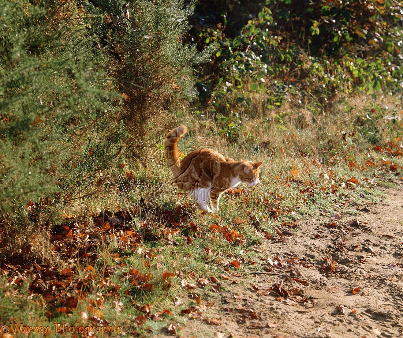 Cat spraying http www warrenphotographic co uk 00294 cat spraying