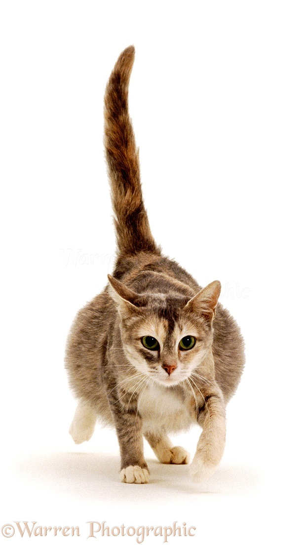 pregnant cat photo wp00349