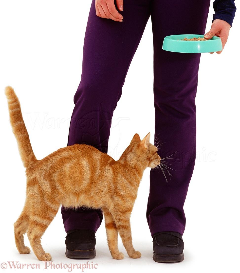 cat rescue nj
