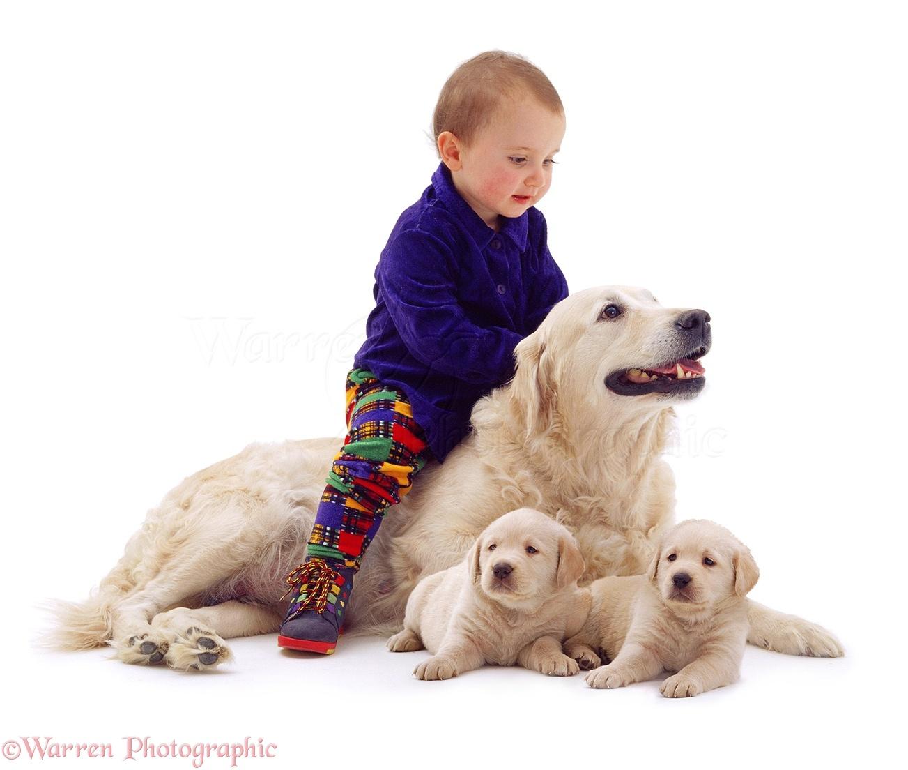 Dog  Year Old