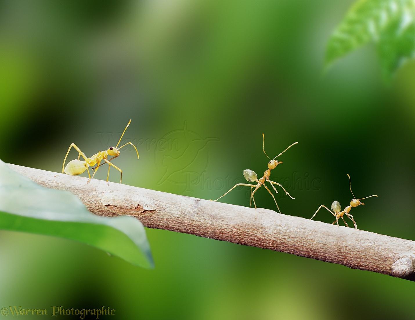 ants bugs