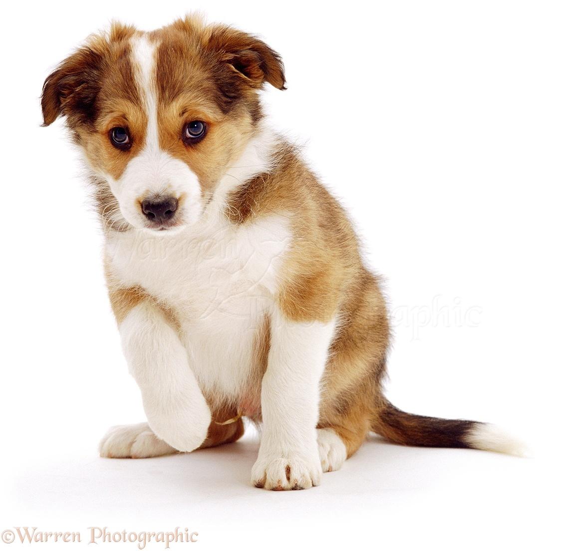 Dog Cute Puppy Photo Wp00837