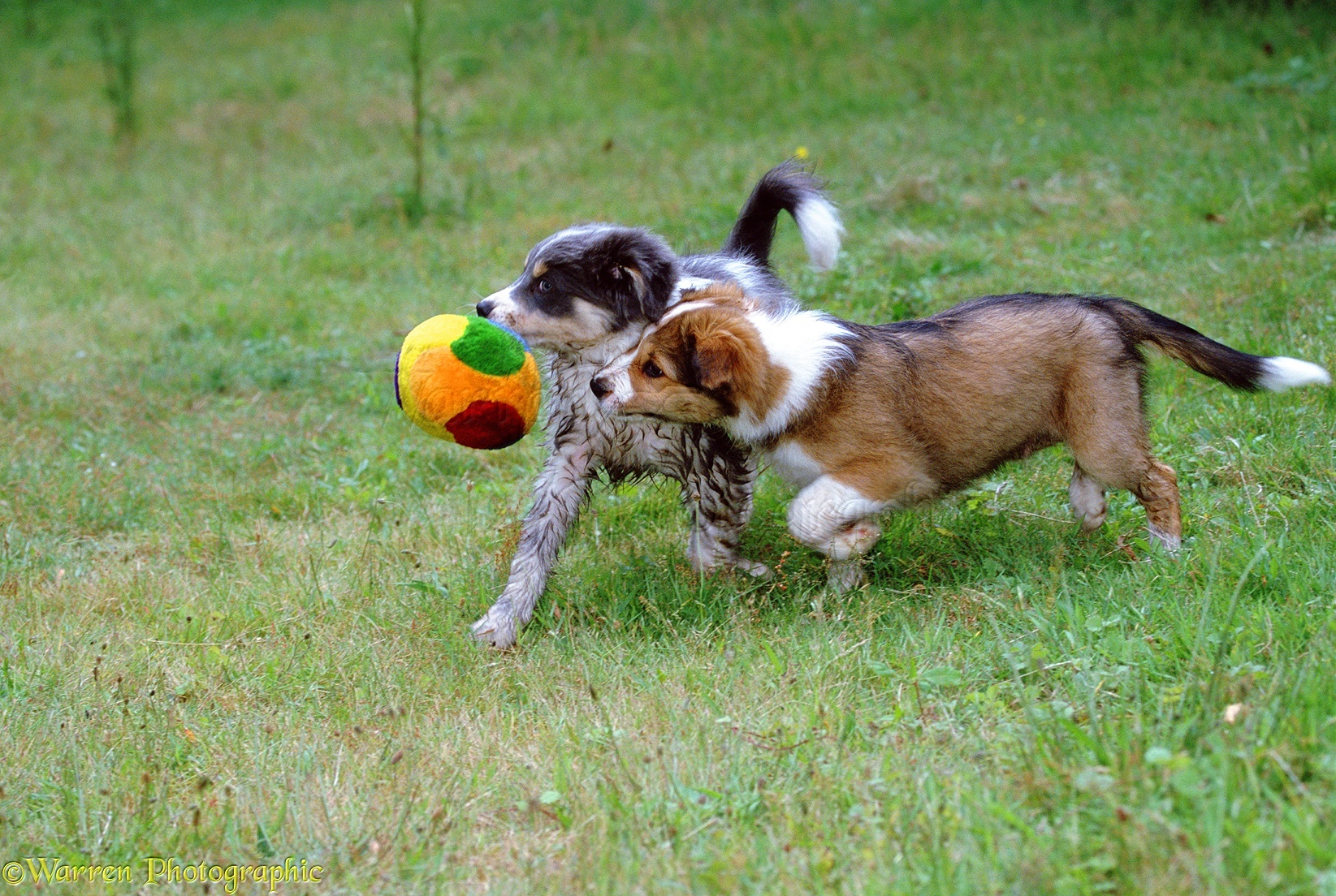 puppies playing on the - photo #21
