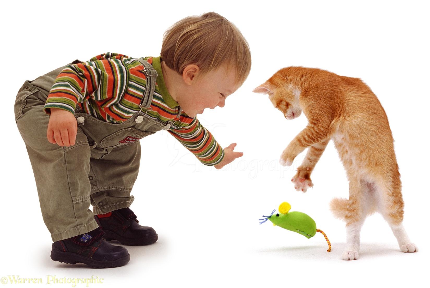 Ginger Cat Dancing