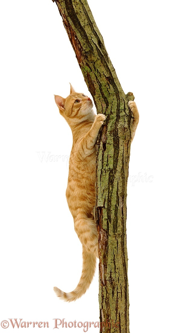Cat Climbing Tree Pictures