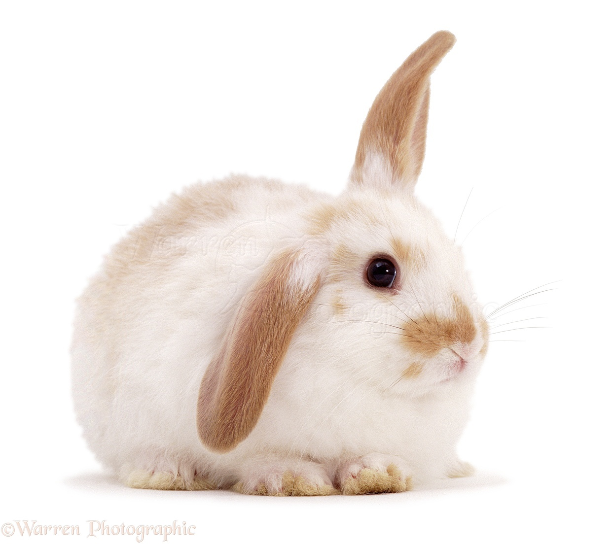 how to clean rabbit ears