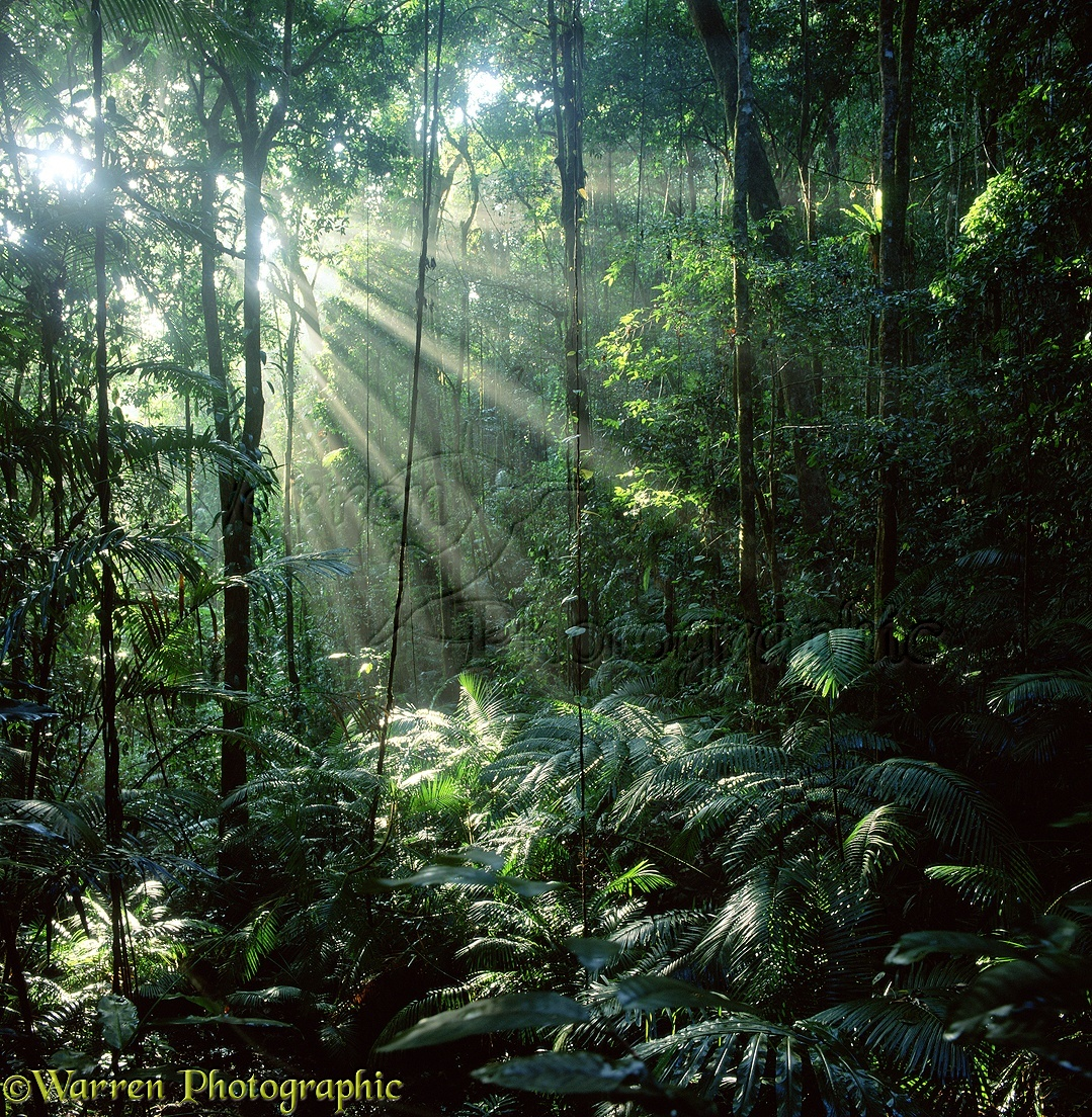 Cairns - A Guide to Tropical North Queensland Photography ... |Tropical Rainforest Photography