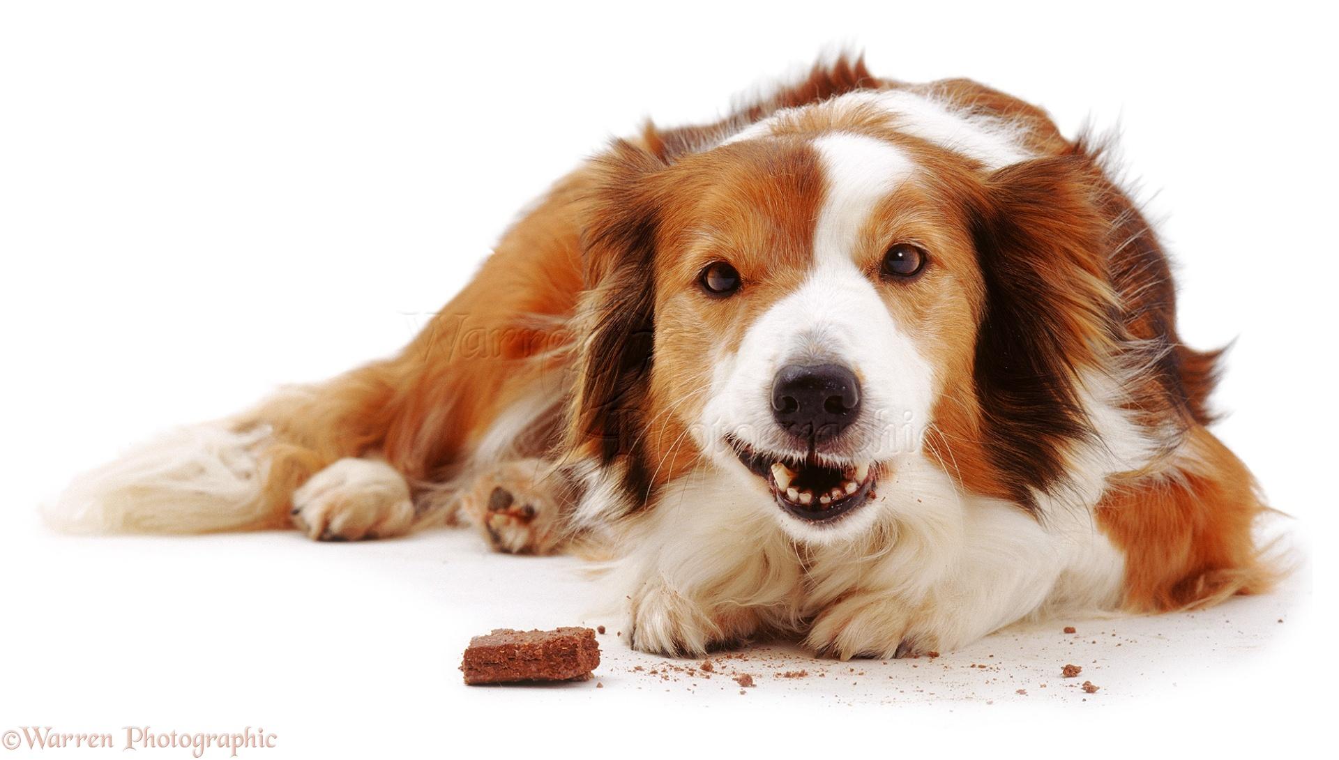 Dog Eating Photography