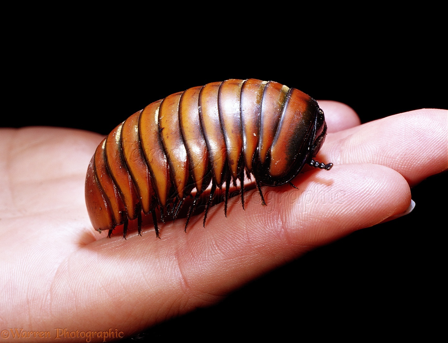 IUCN Red List update: species face extinction | Green ...