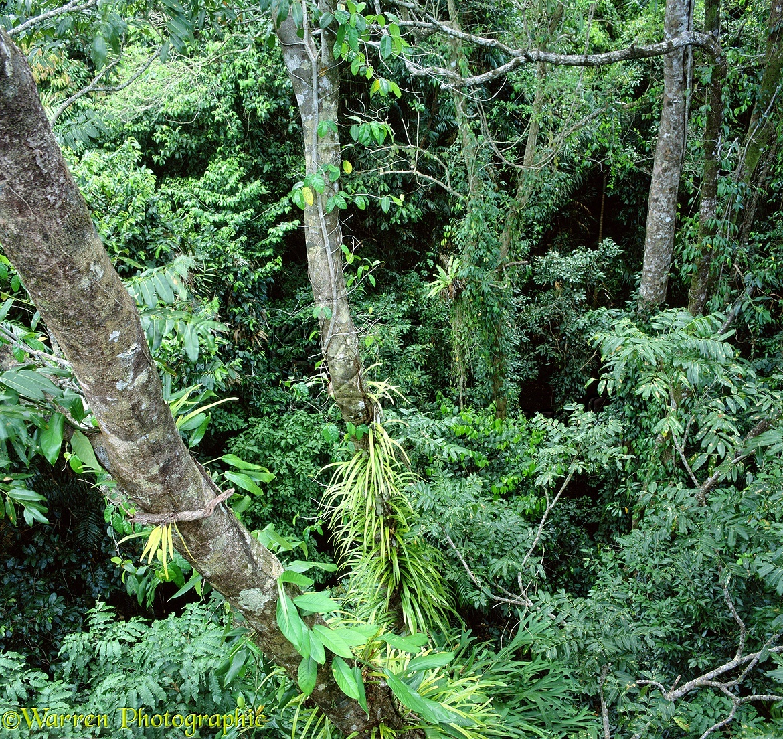 Rainforest canopy 3D 1 R. Queensland Australia & Rainforest canopy 3D 1 R photo WP01758