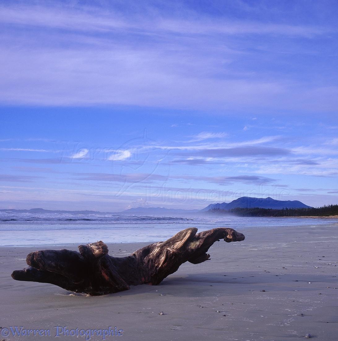 Desert Island Beach: Driftwood On Vancouver Island Beach Photo