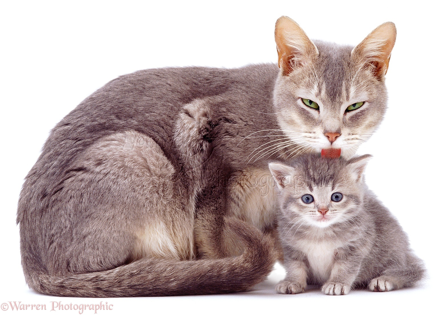Cats Mother And Kitten