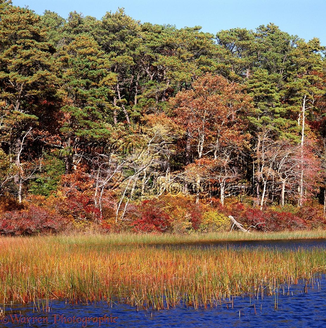 New England scenery photo  WP02585