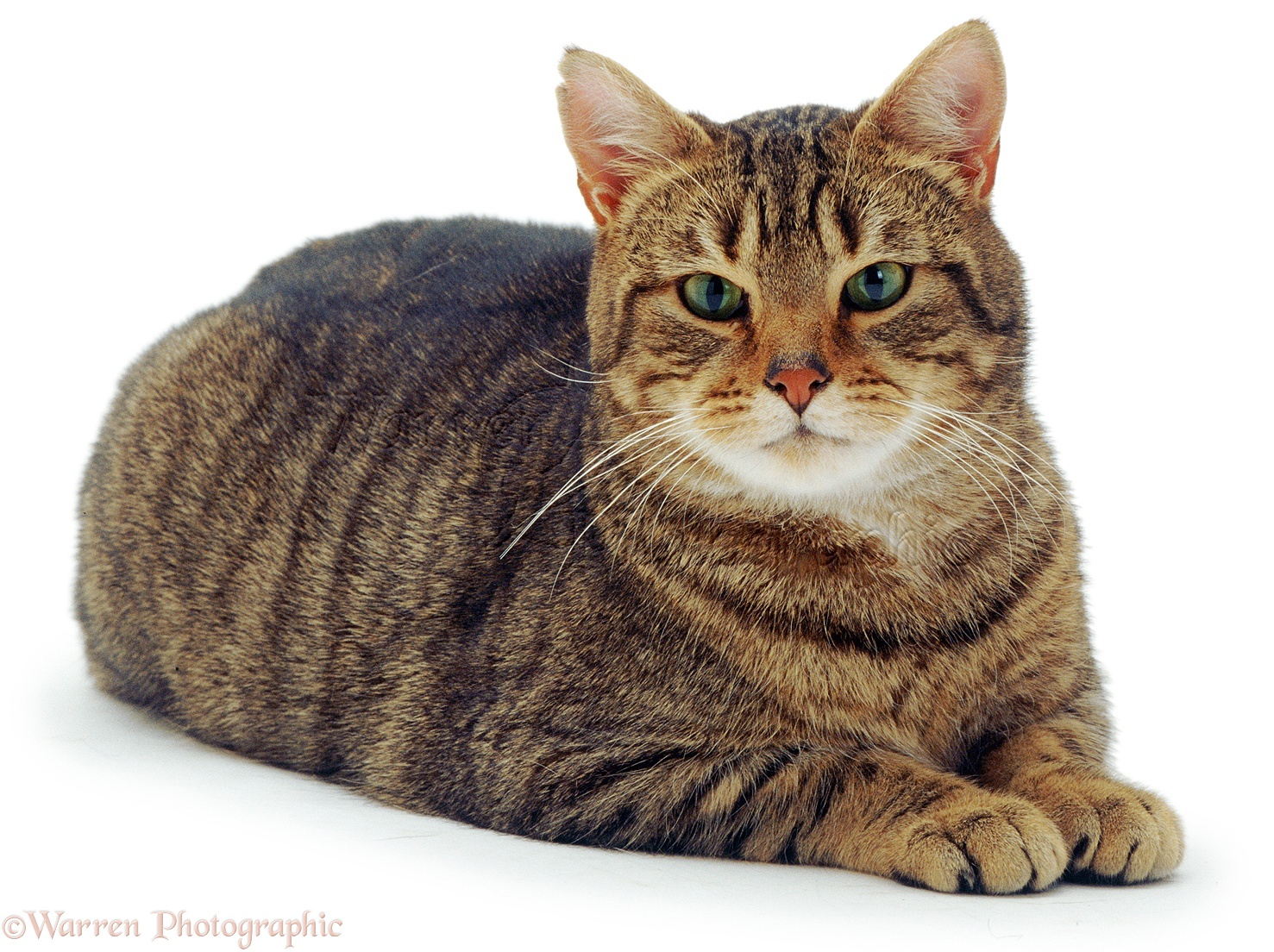Cat With Green And Brown Eye