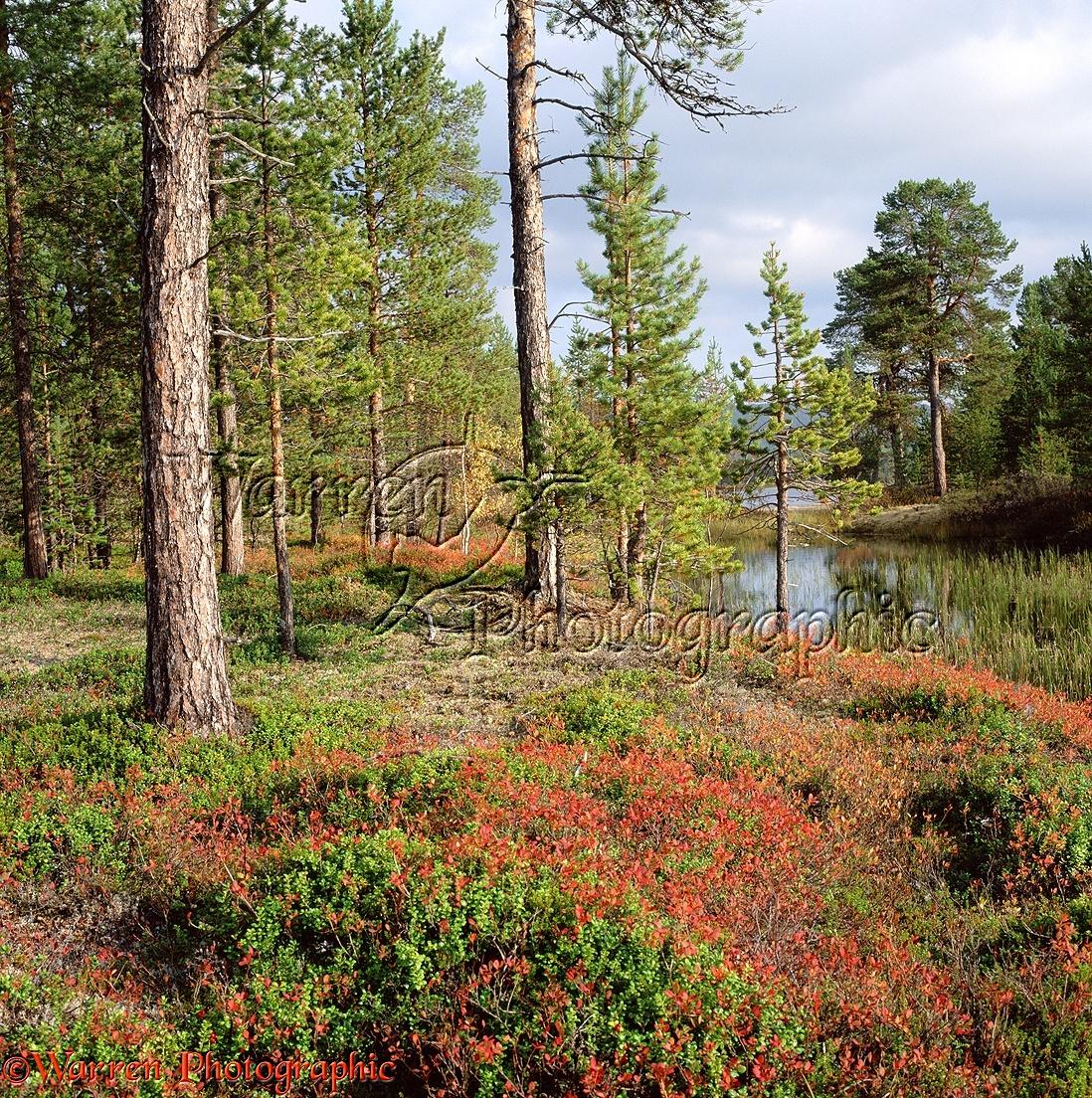 WP02881 Autumnal sceneryLemmenjoki , Finland .