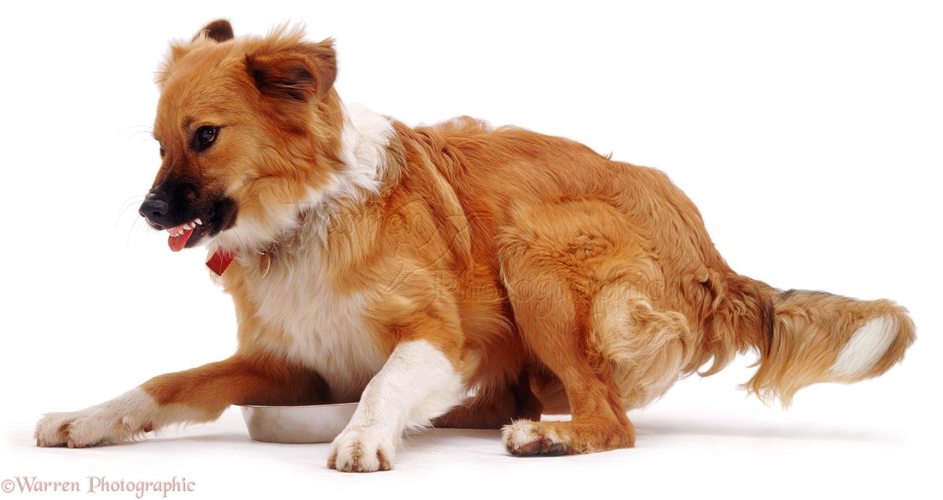 Dog With Dog Food