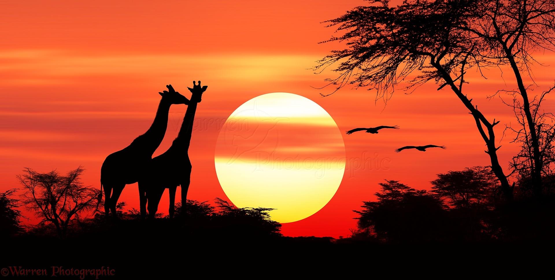 Image result for africa sunset