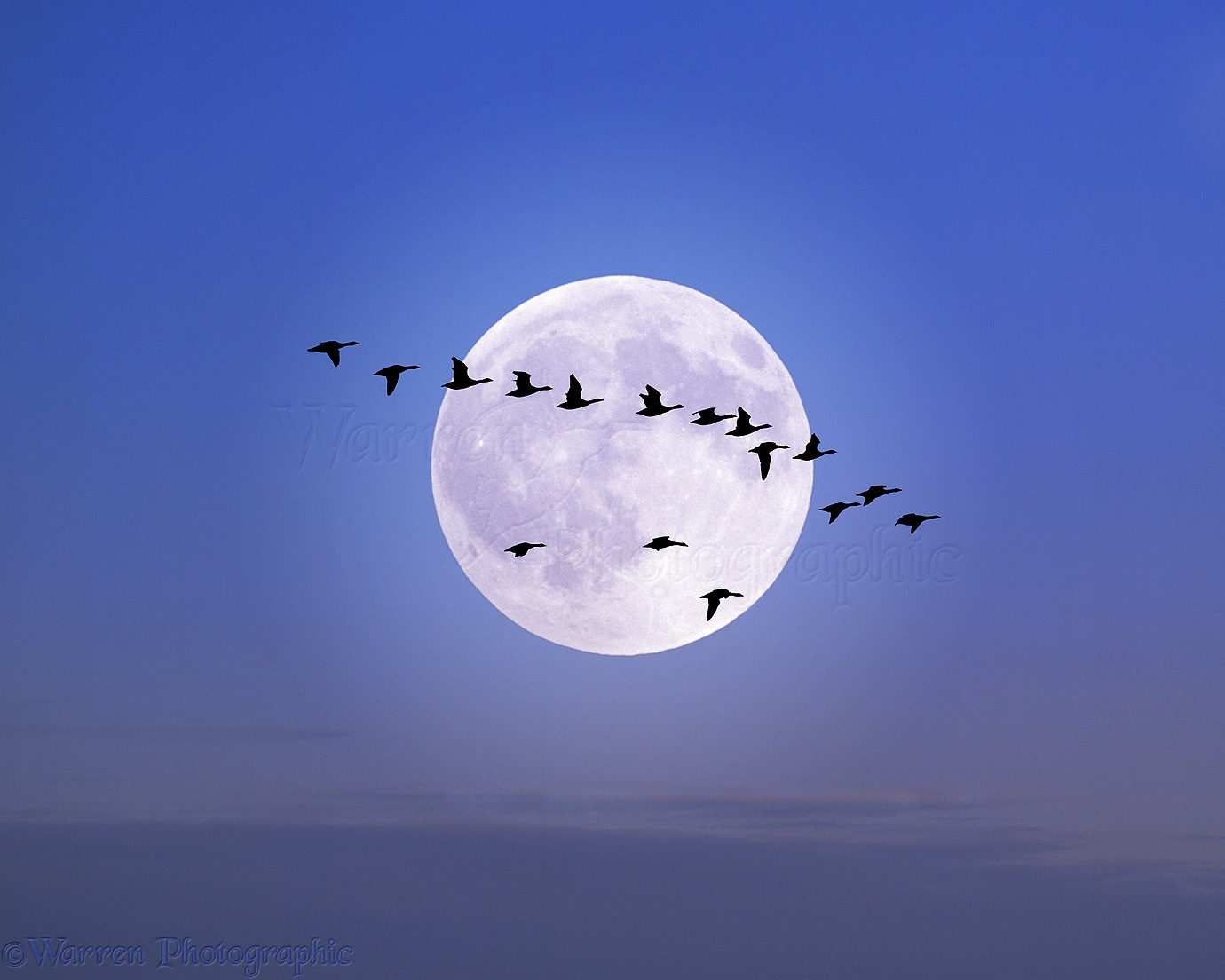 Image result for Geese in the moonlight images