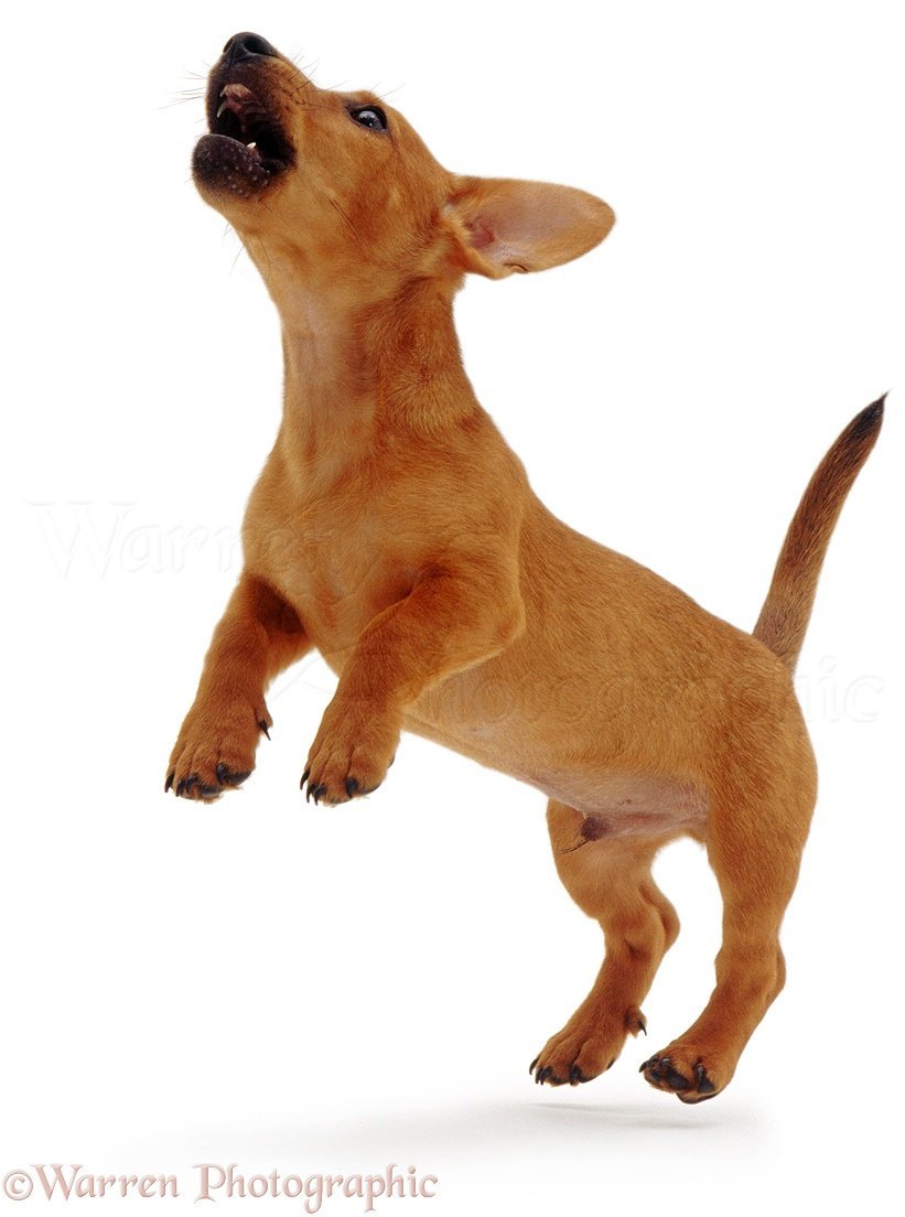 grooming and getting your home ready for the new puppy puppy 101