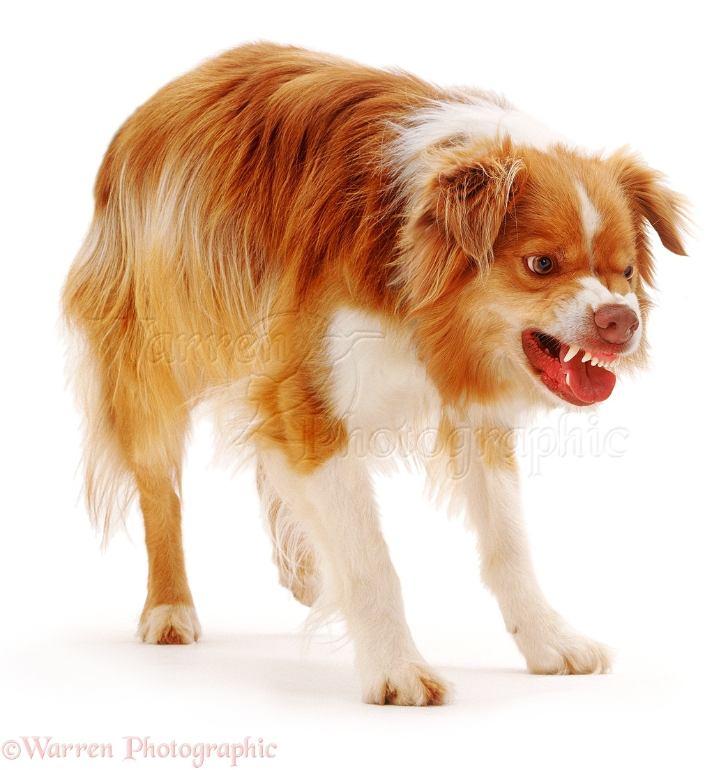 how to stop a dog from snarling