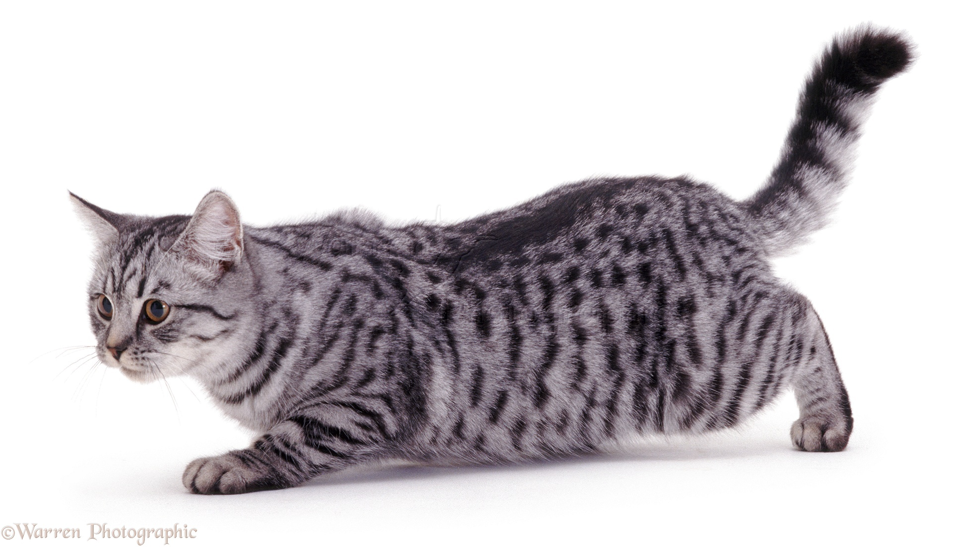how to keep your cat from biting their paws after declawing