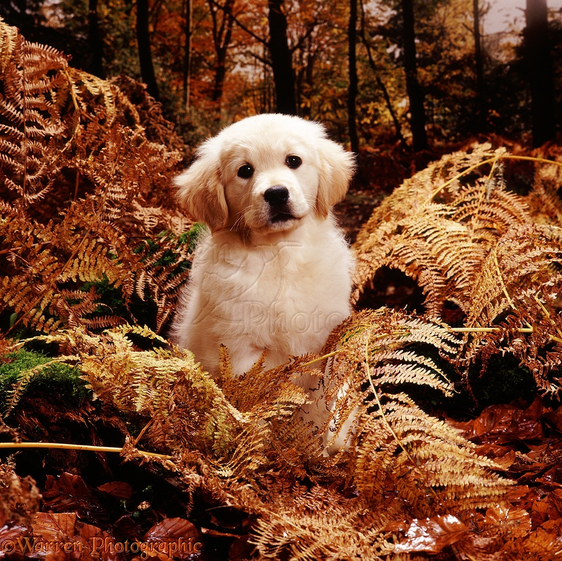 Single mit hund kostenlos