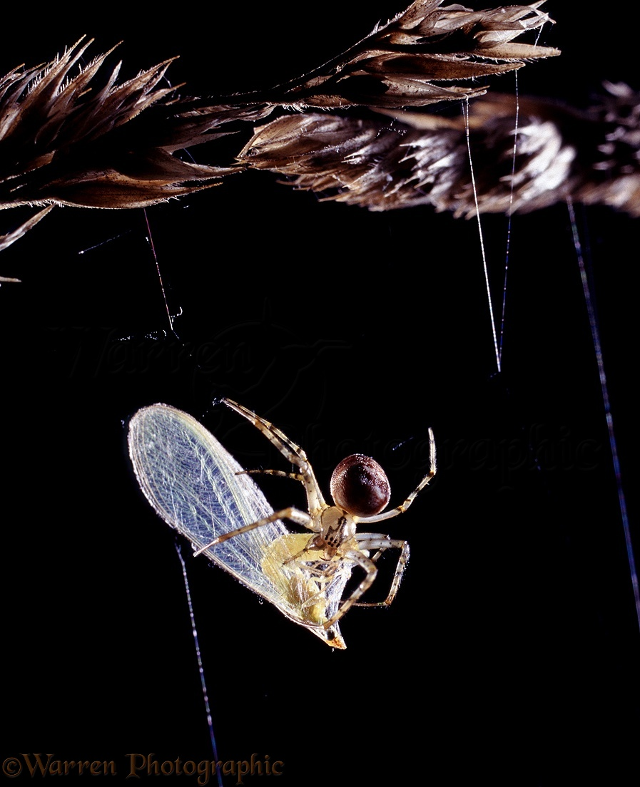 Spider in web with prey - photo#17