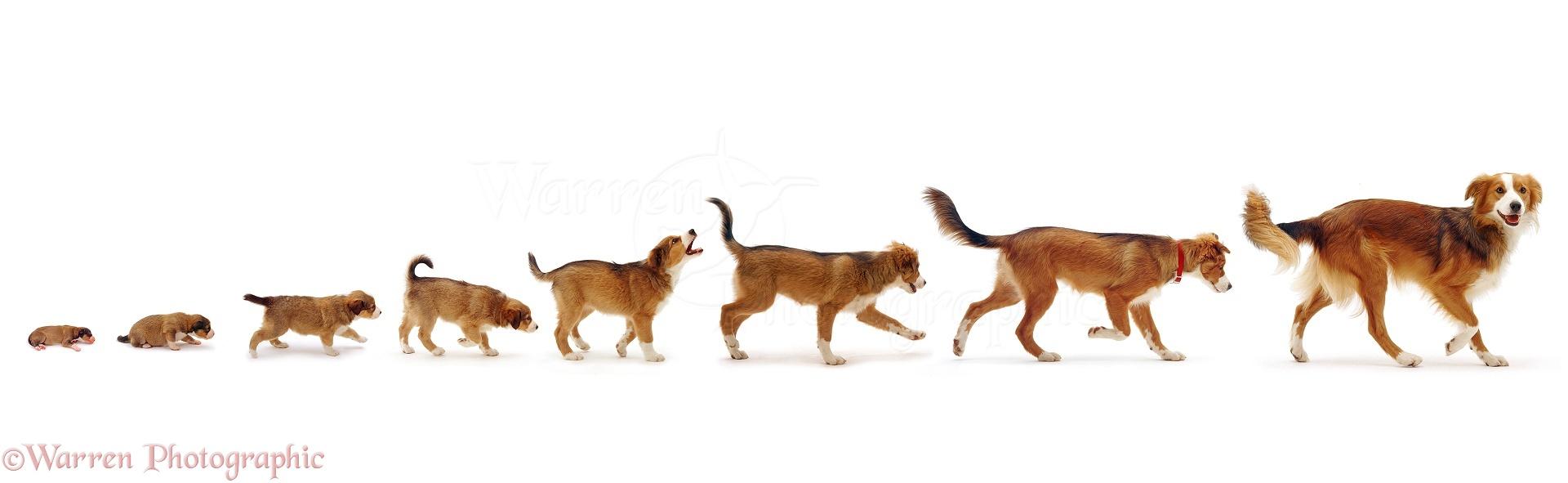 Dogs Days Single