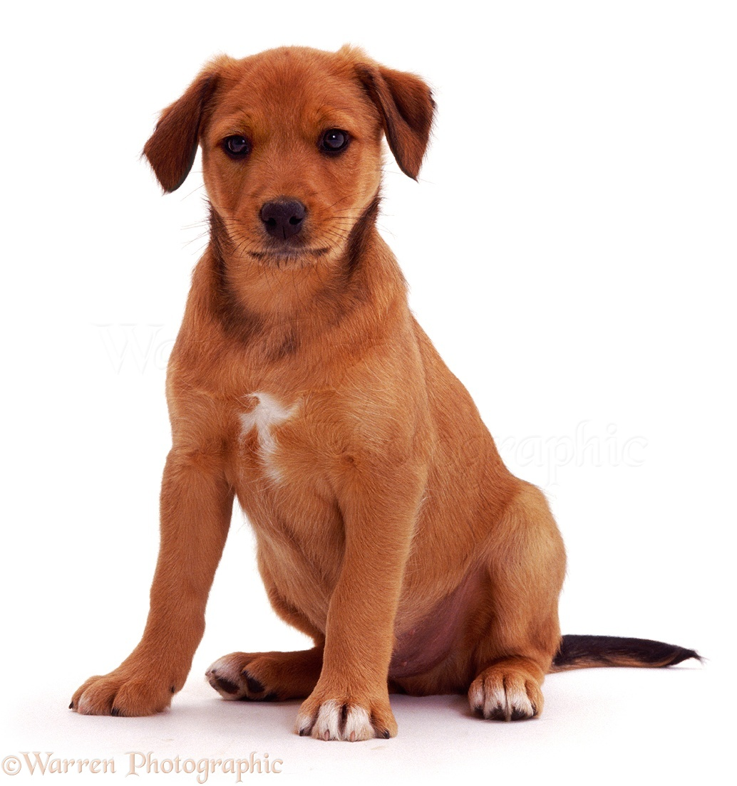 Images Clipartof Royalty Free Rf Clipart Illustration Of A Brown Puppy ...