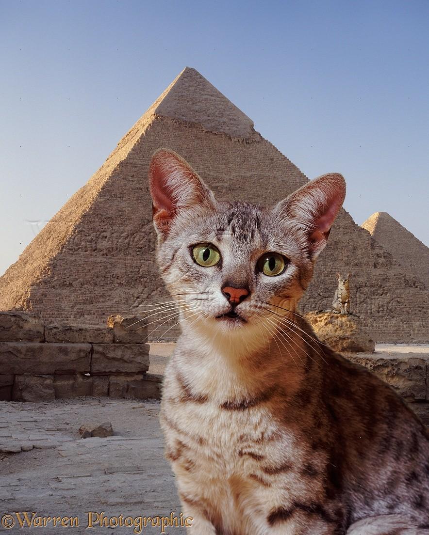 виде красивые кошки в египте фото слугу