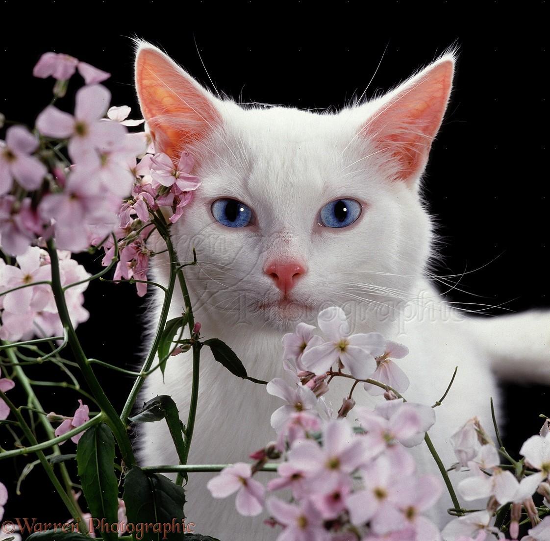 the cat of mastigatus