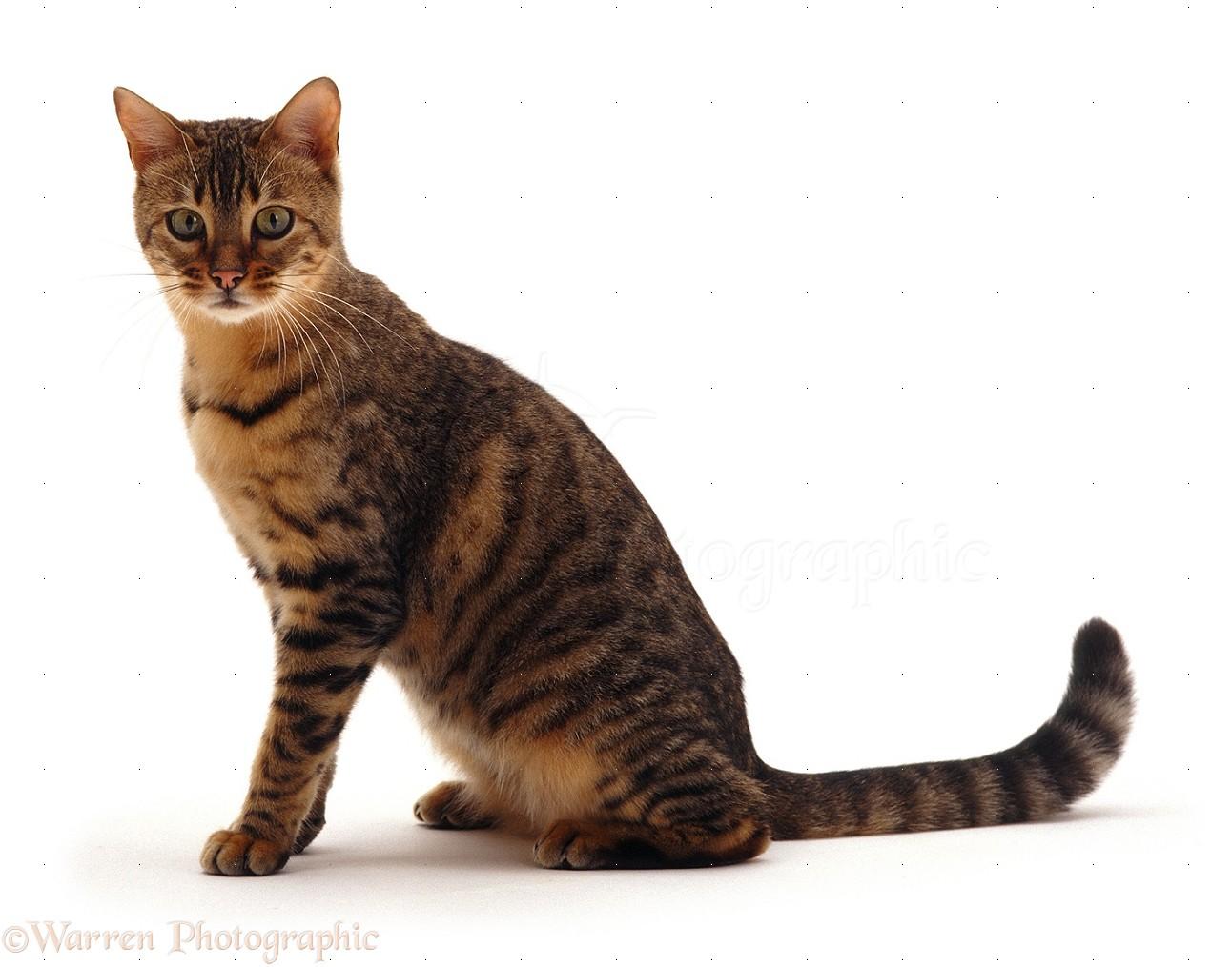 Cat sitter : Cargador compaq 610