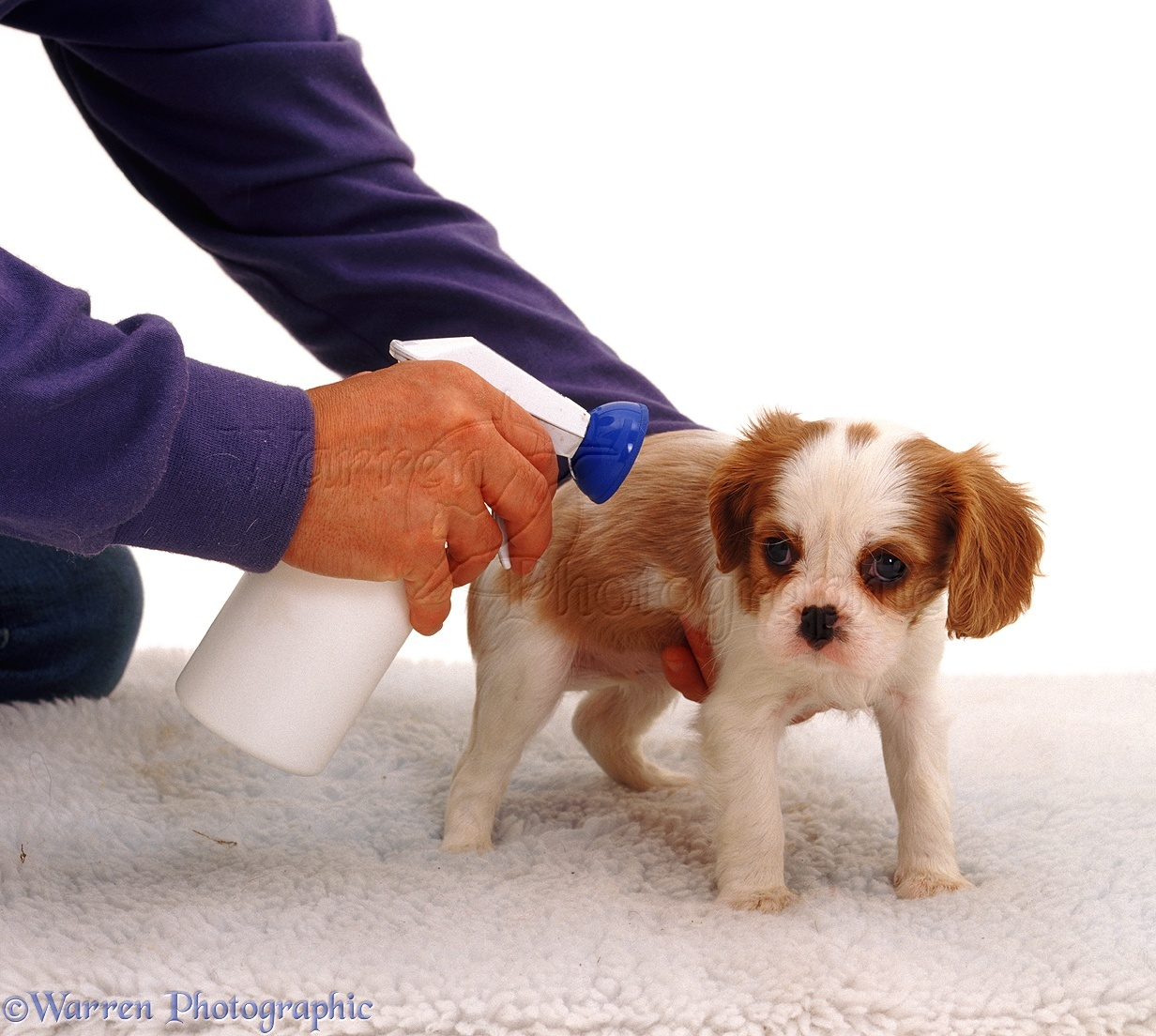 flea treatment for furniture and carpet