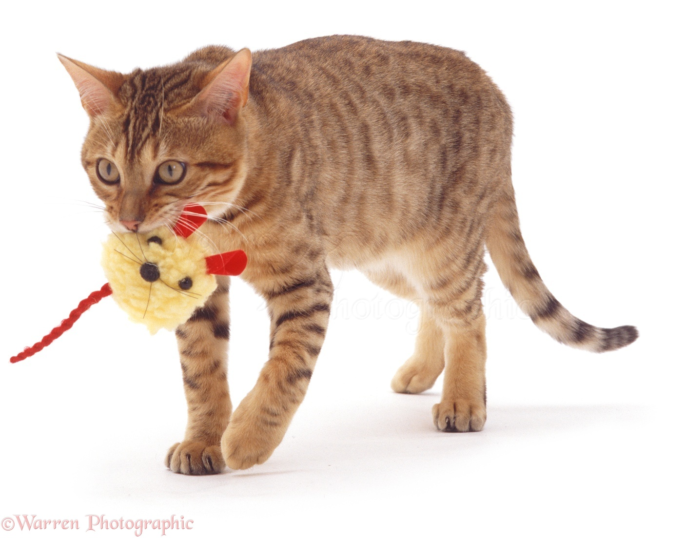 Brown Tabby Cat Toy