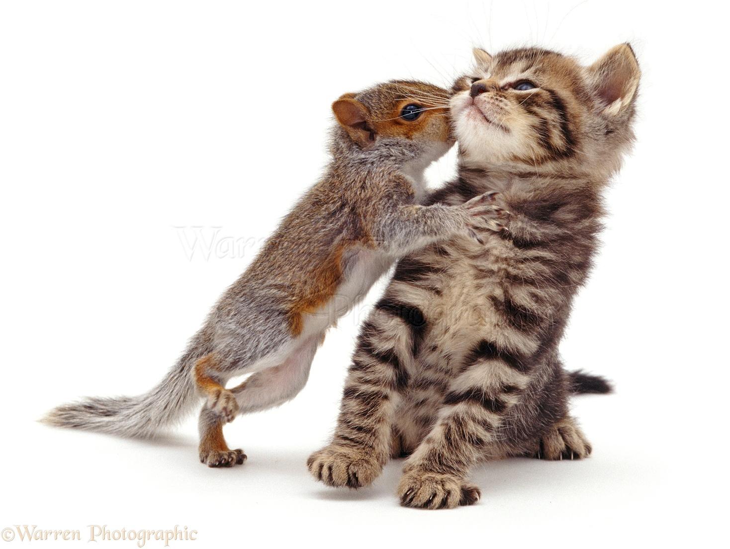 Cute squirrels in love - photo#26