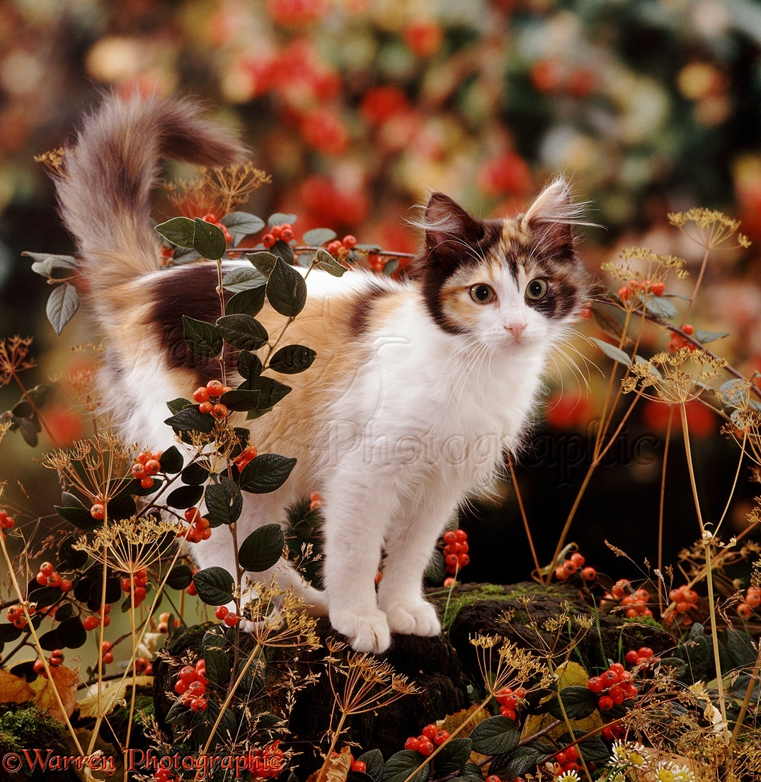 Image result for beautiful kittens autumn