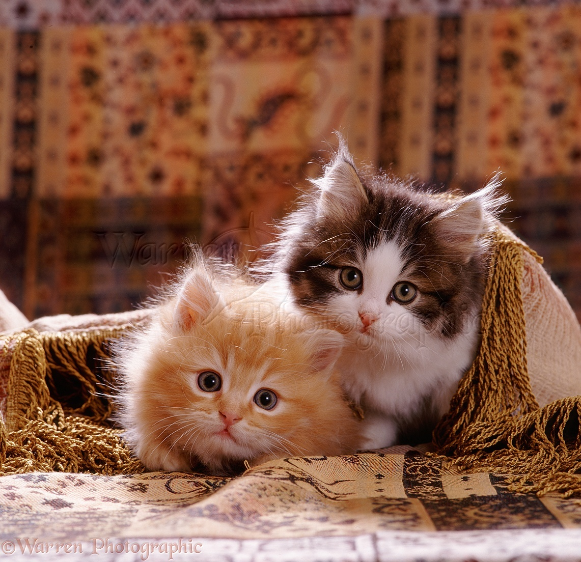 Cute kittens under a cover photo WP