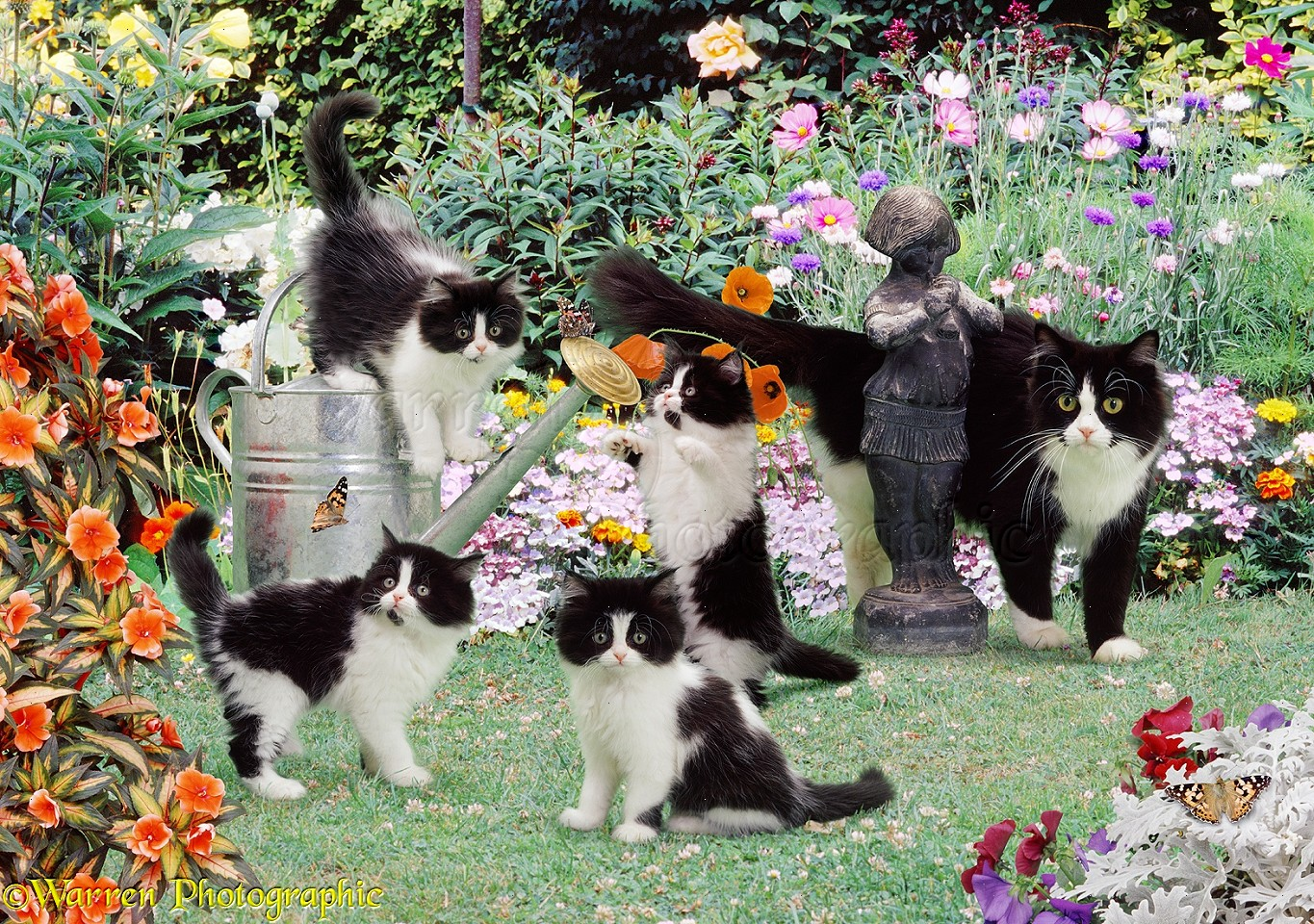 Superb Black And White Cats In The Garden Jigsaw