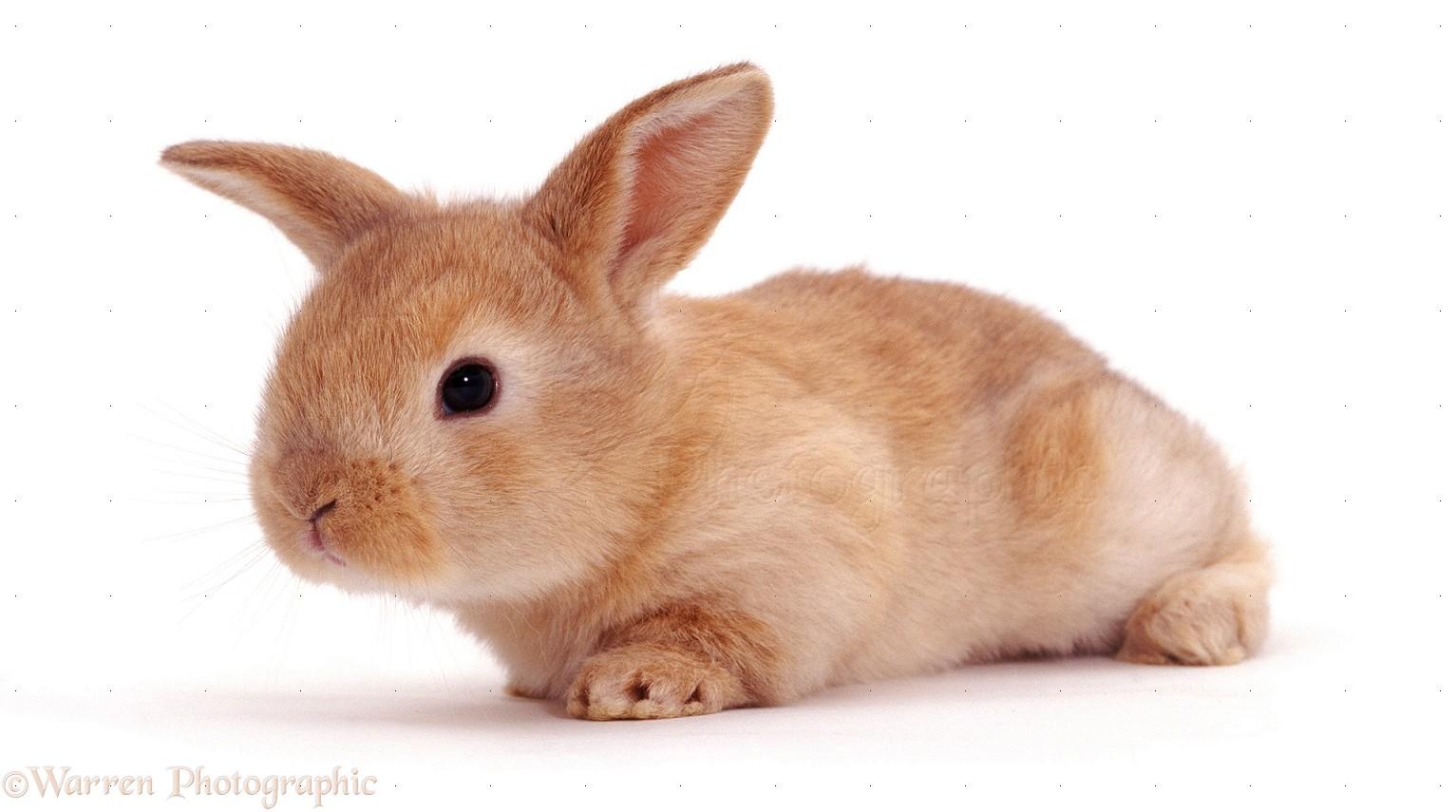 rabbit 3: