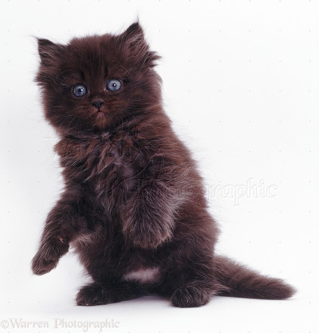 New Black Cats
