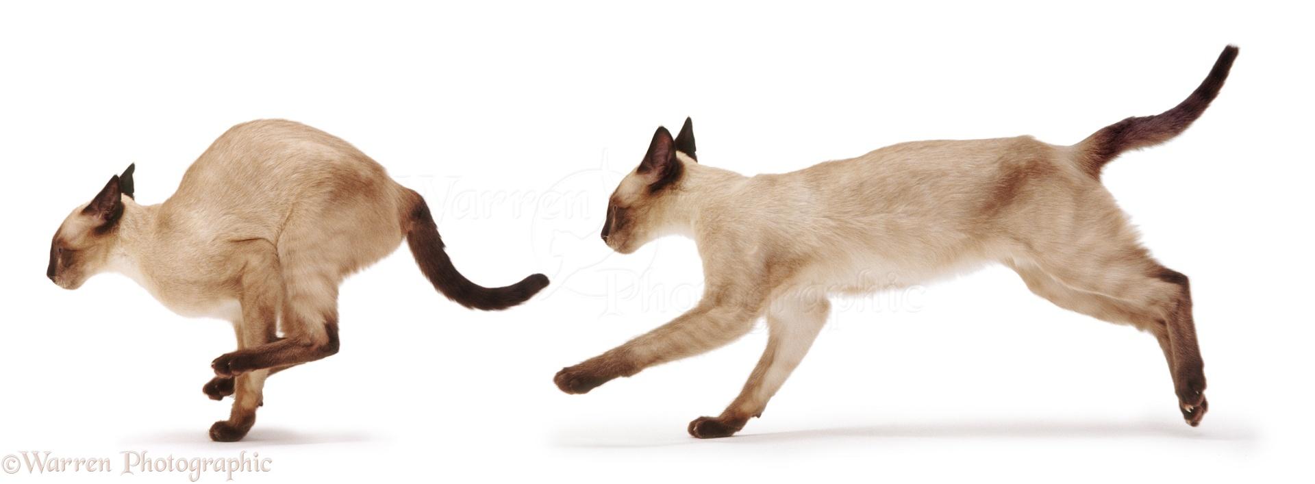 Cat Gallery Co Uk