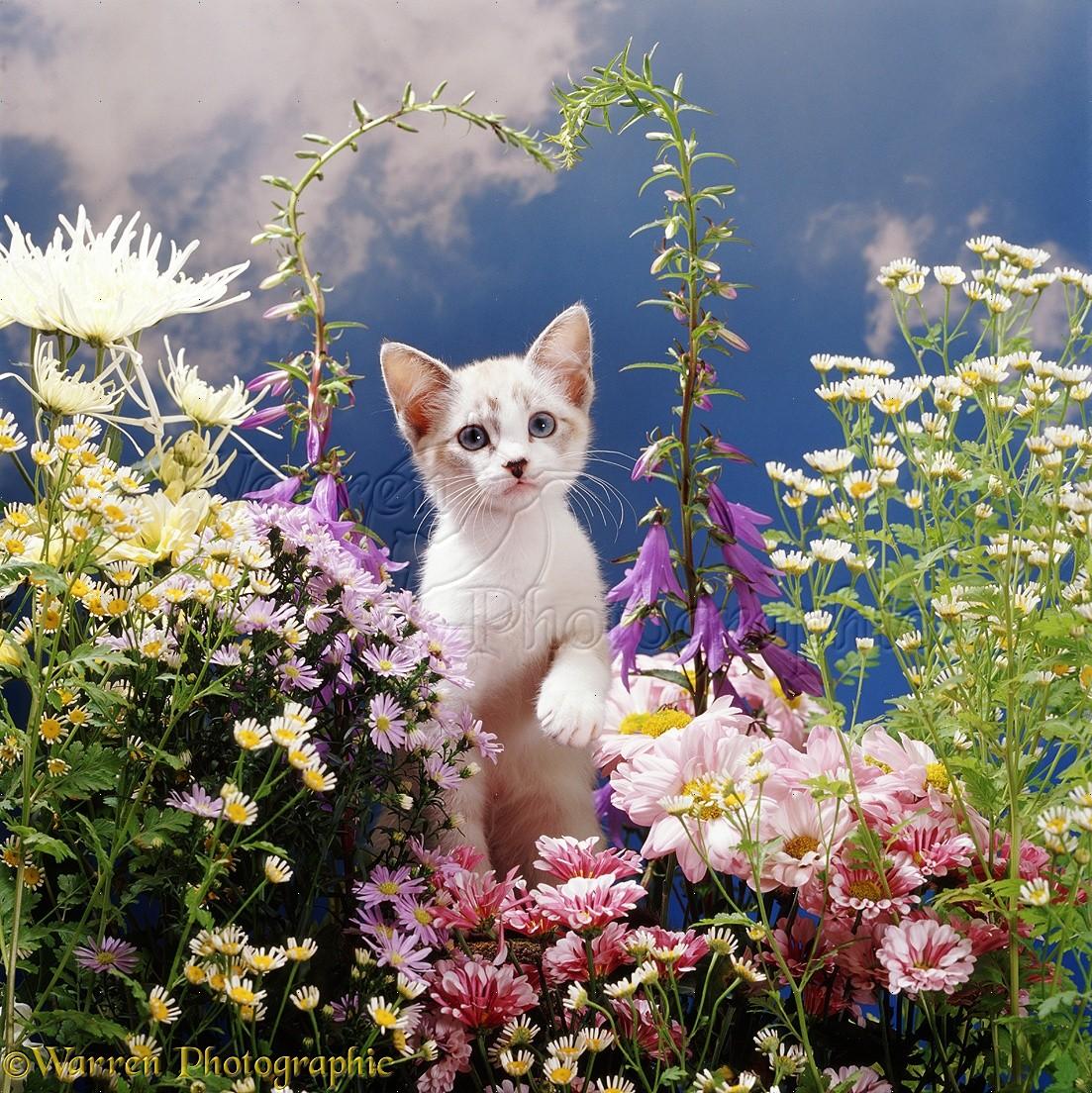 Kitten Among Flowers Photo Wp08195
