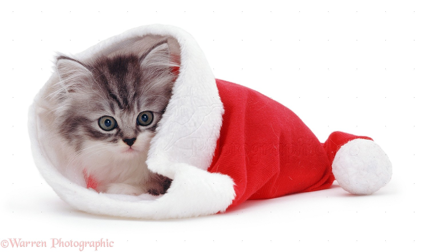 Cute Dog Christmas Wallpapers  HD Wallpapers  ID 11967