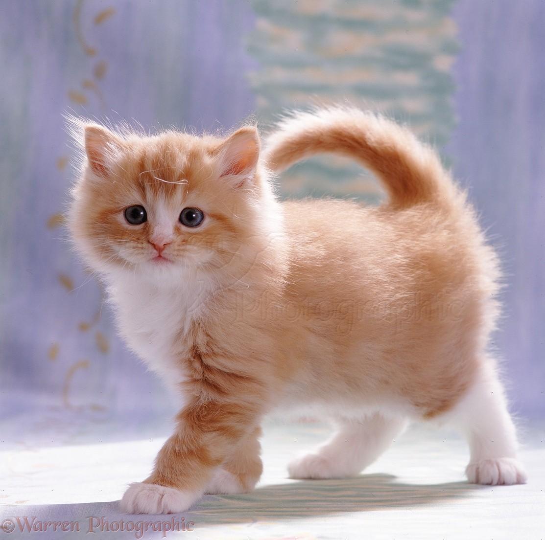 Image result for kitten