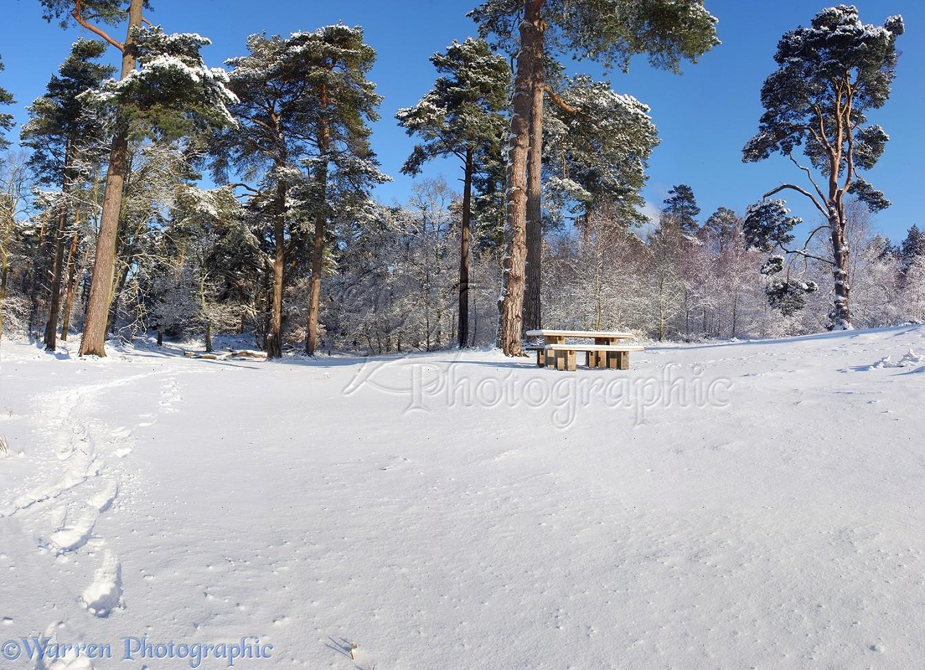 Snowy Scene Photo Wp09151