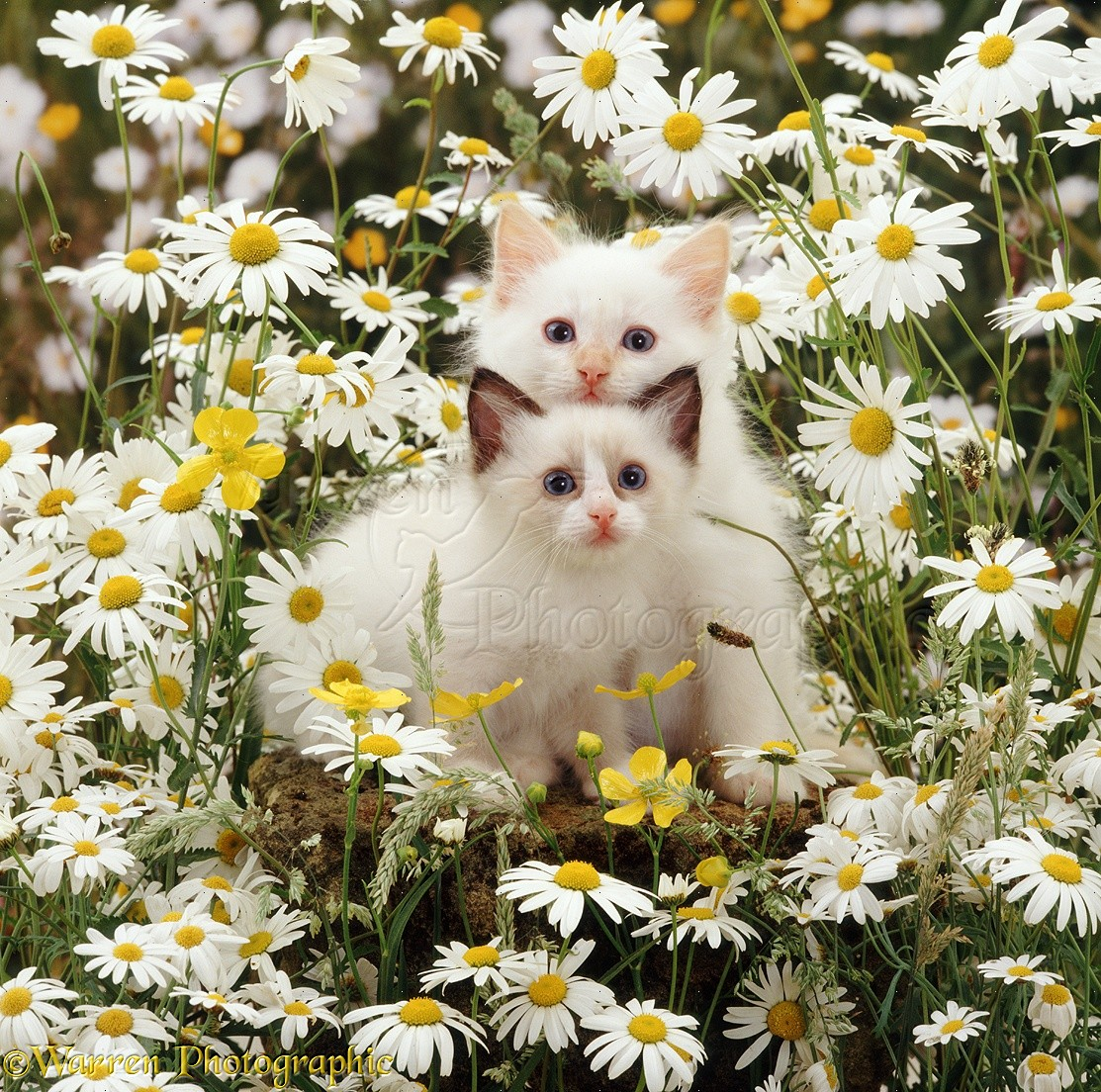Picture Of A Cat Flowers